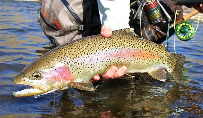 The History Of Orvis Fishing Tackle