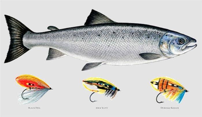 Mayfly Art - Fishing and Wildlife Art by Maria Gonzalez