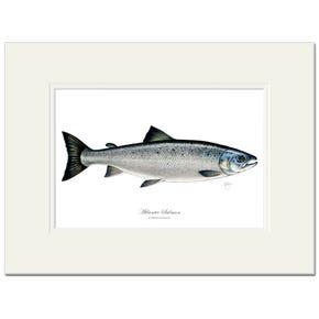 Atlantic Salmon Signed Fine Art Print by Maria Gonzalez