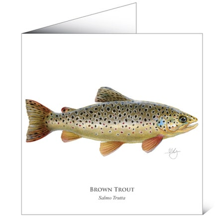 Mayfly Art Greetings Card - Brown Trout