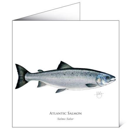 Mayfly Art Greetings Card - Atlantic Salmon