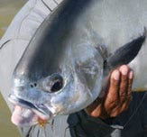 Browse our range of saltwater fishing and tropical fly lines