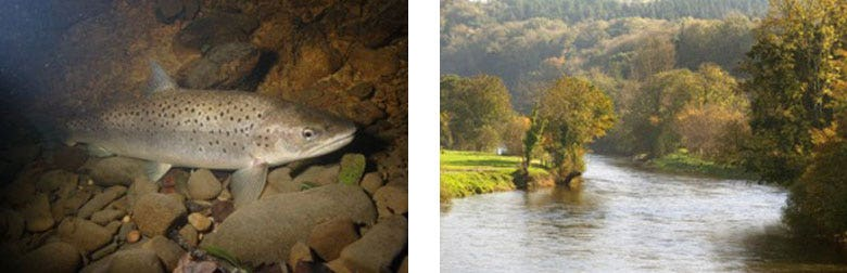 The Fish and Beat at Abercothi
