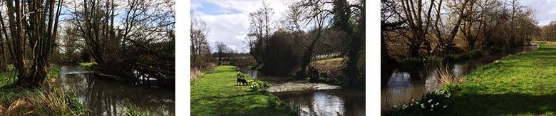 River Pang Barn Elms Fishery