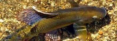 Tackle Up for Grayling
