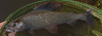 Tackle Up for Winter Grayling