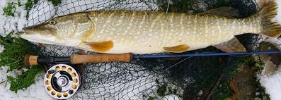 Tackle Up for Winter Pike