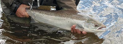 Tackle Up for Spring Salmon